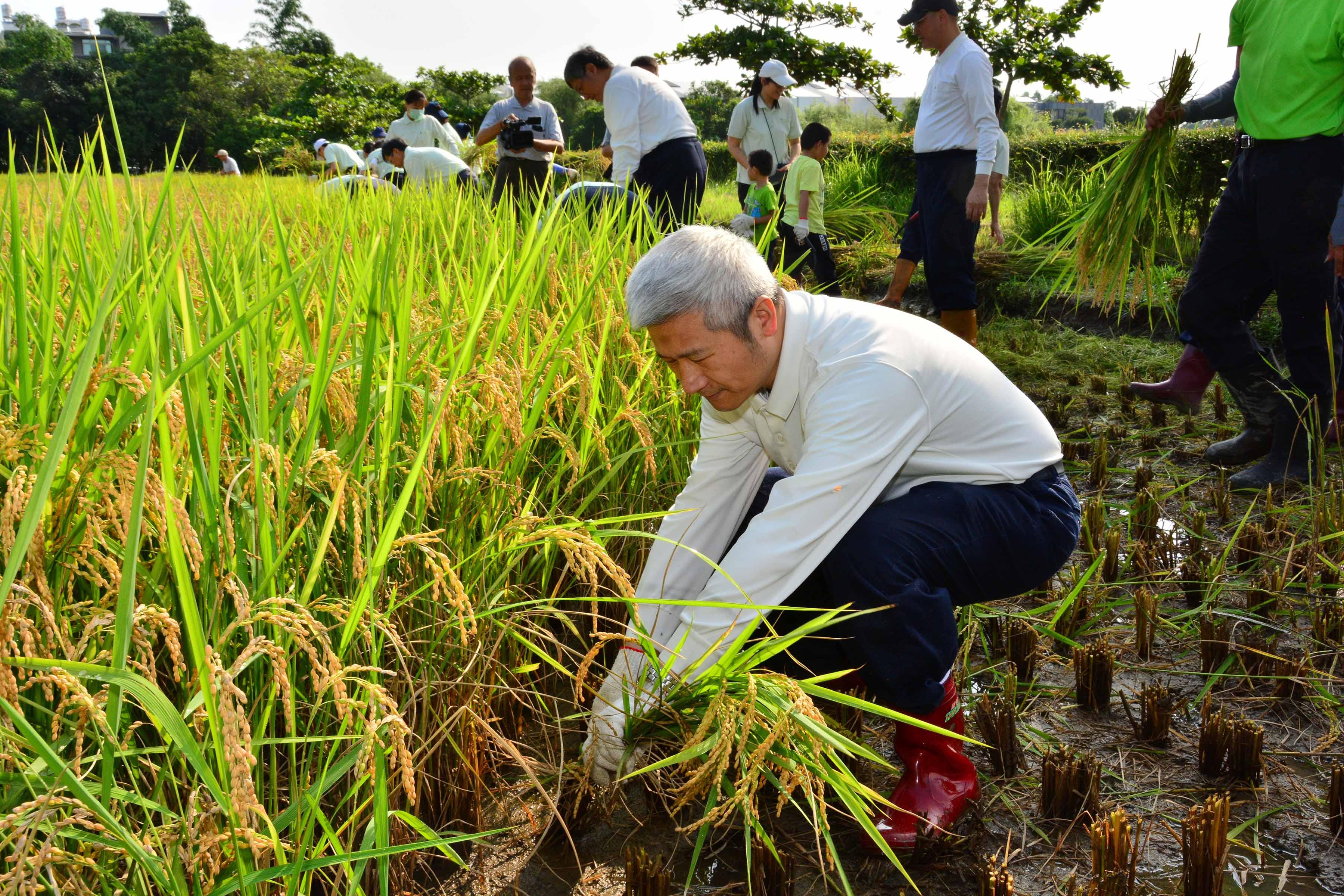大林慈濟醫院陳金城副院長自身也很注意身體保養,圖為他與大林慈濟醫護同仁踏入田間,親近土地,體驗農夫收割的辛勞。