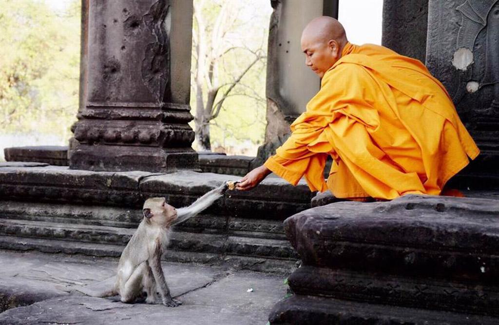 唐美雲在吳哥窟拍攝真諦大師猴子闖入片場。