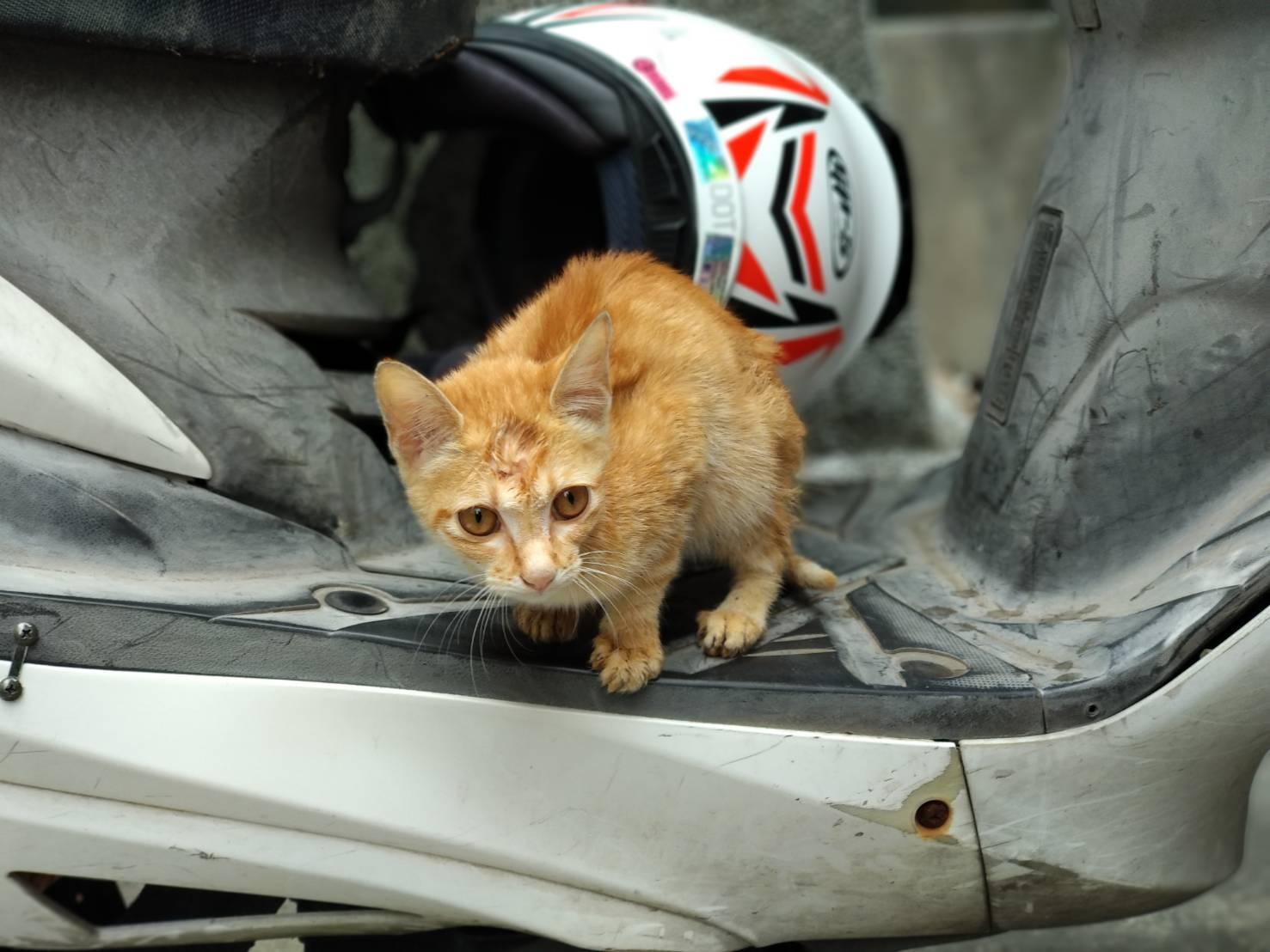 機車踏板上滿臉病容瘦骨嶙峋小橘貓虛弱鳴叫如摩斯密碼SOS般哀求援助。