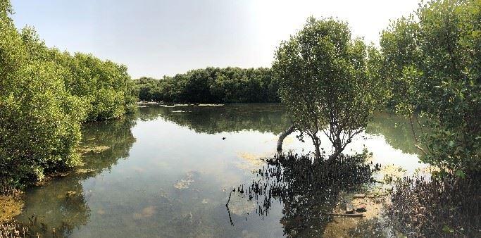 林園海洋濕地公園一隅。