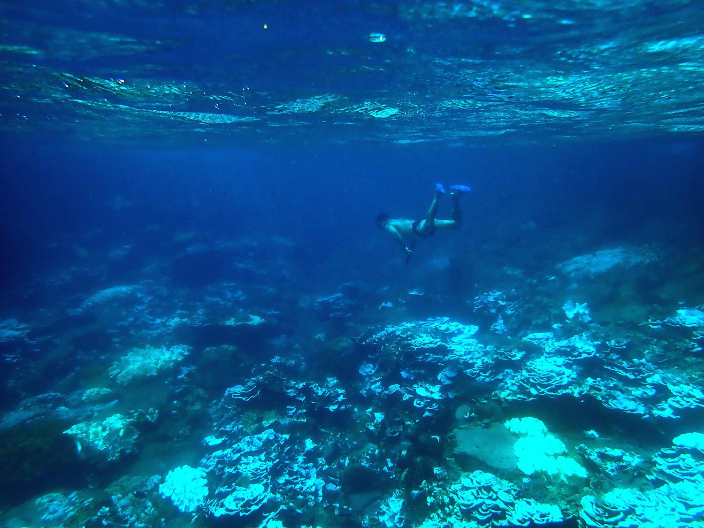 2020年9月澎湖東吉島珊瑚白化的狀況。