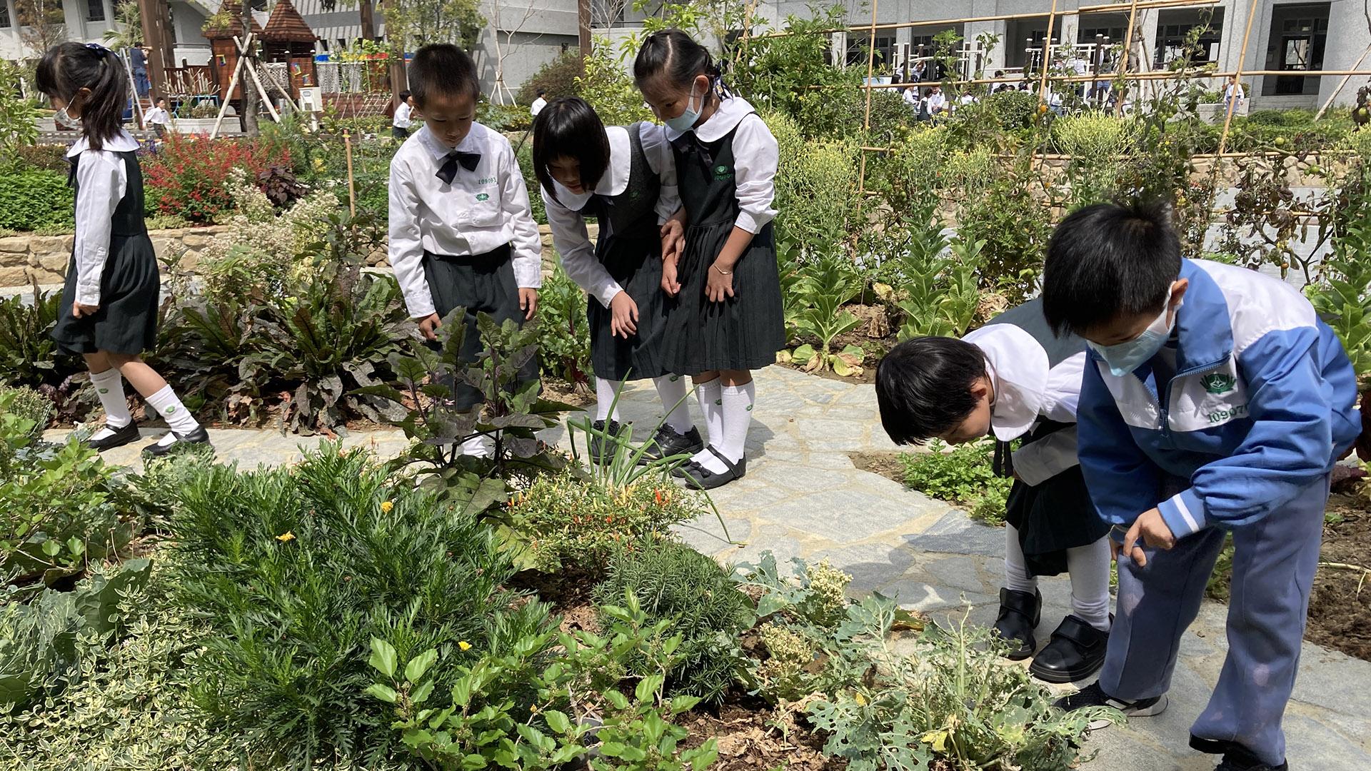 小學部中庭香草植物教材園區,香草植物地景激發五感體驗。
